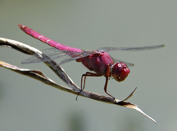 Dragonfly Wings | ... cityscapes transportation world 4photos insects dragonfly dragonfly