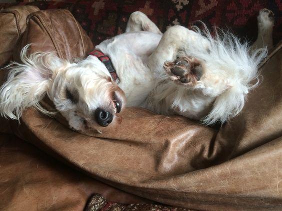 Harry relaxing