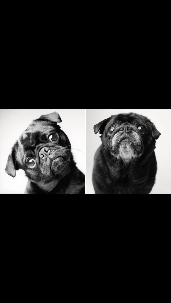 Dogs growing old