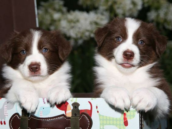 Screening Puppy Buyers—How Top Breeders Find the Best Homes