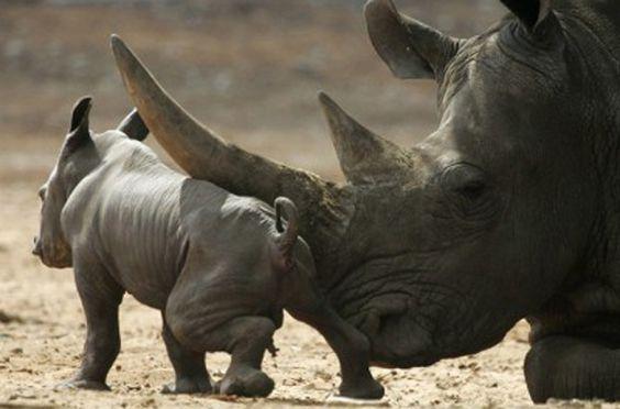 Mozambique to destroy seized ivory, rhino horn | Metro