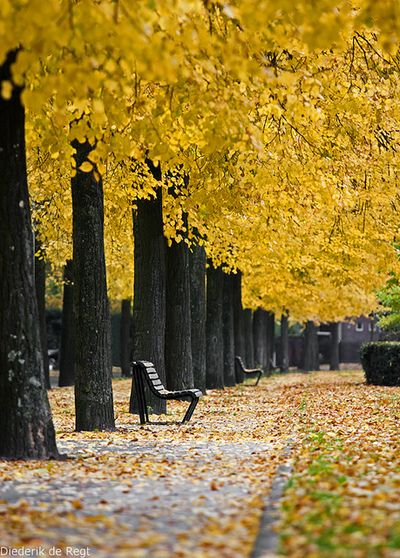 """When I saw this I literally said """"OH good gracious...."""" out loud. To myself. I don't know why. But I loooooooove benches + fall time."""