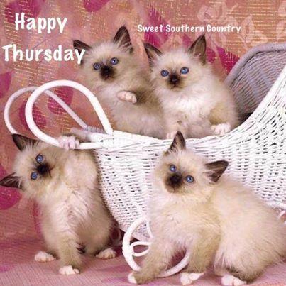 Happy Thursday <img src=