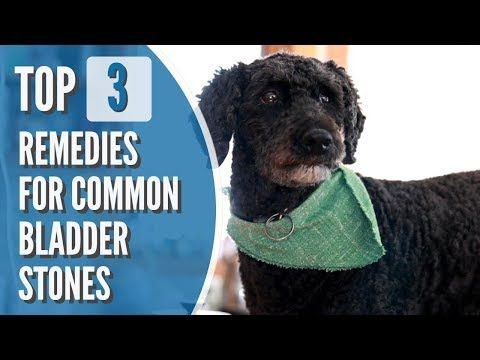 Bladder Stones In Dogs And Cats Top 3 Effective Remedies Dog Cat Bladder Dog Best Friend
