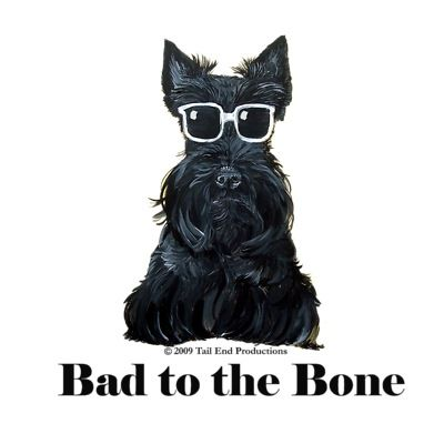 Scottish Terrier Bad to the Bone - These are sooo cute!