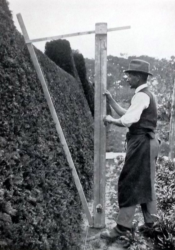 hedge measuring