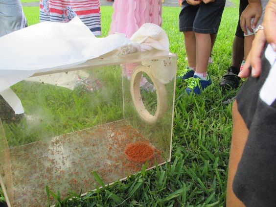 Purchasing, setting up, observing, and caring for real live bugs... we watched them hatch from eggs and spread their wings to fly! Real life explorations are an amazing way to make science real for young children.