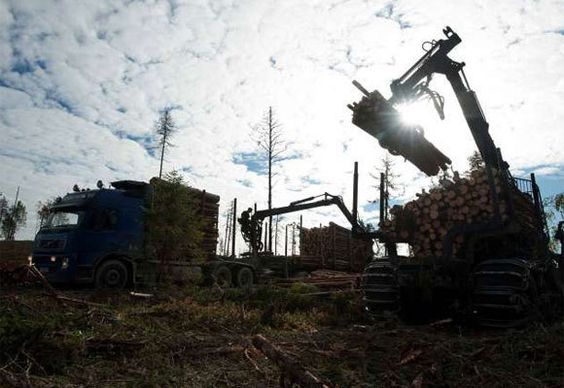 The true cost of IKEA: logging old-growth forests