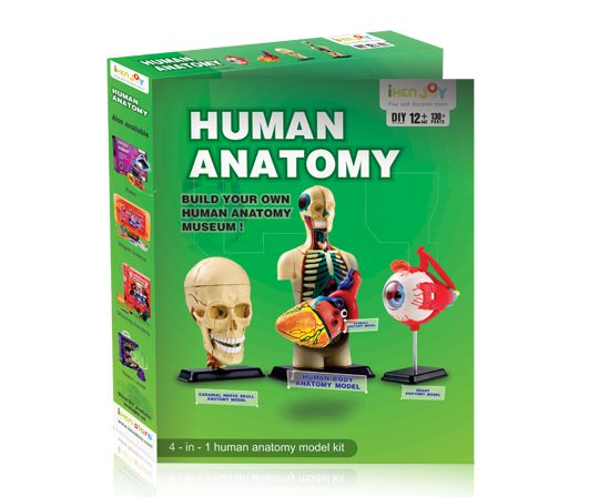 Learn the various organs of human body and know the relationships between those organs through this DIY toy. It is suitable for ages 8+ and board curriculum.