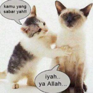 Wow 10 Gambar Kucing Lucu Ada Kata Katanya Kata Lucu Gambar Kucing Cikimm Com From Www Cikimm Com Kata Kata Lucu Terbaru Yang Bikin Cute Cats Cute Animals