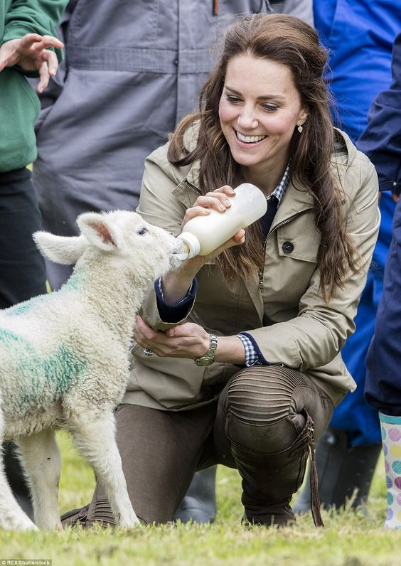 The Duchess of Cambridge revealed that she and Prince William keep a menagerie of animals during a visit to a farm in Gloucester today. Pictured: Kate feeding Stinky the lamb: