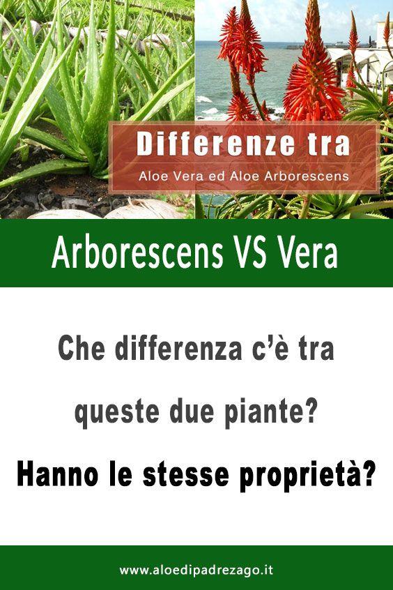 Che Differenza C E Tra L Aloe Vera E L Aloe Arborescens Aloe