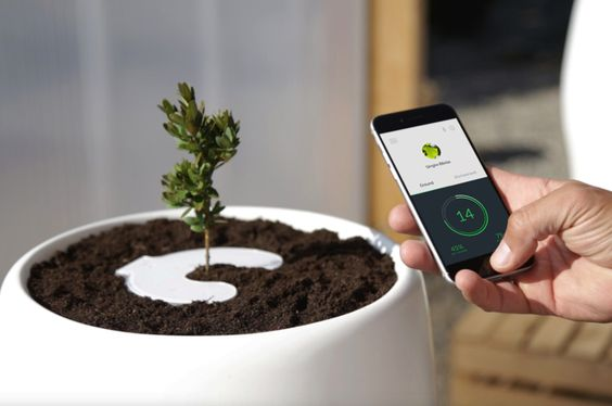 The Bios Incube will incubate a tree made from your loved one's ashes to show that there is life after life and to create a more meaningful and sustainable connection with those who have passed.