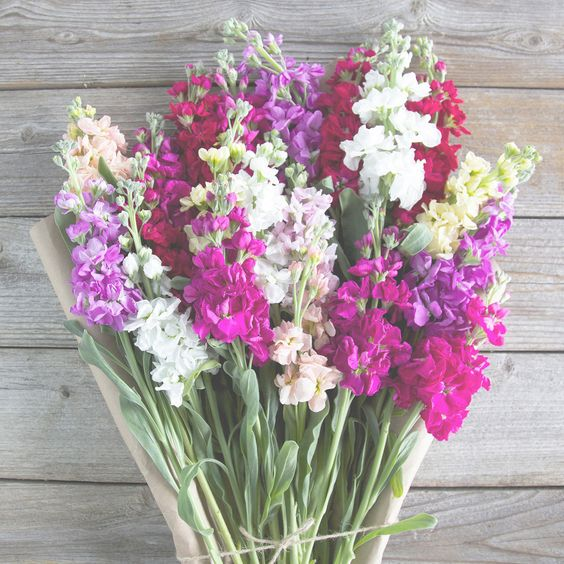 The Bouqs Volcano Collection 'Your Rock' Deluxe Matthiola Bouquet