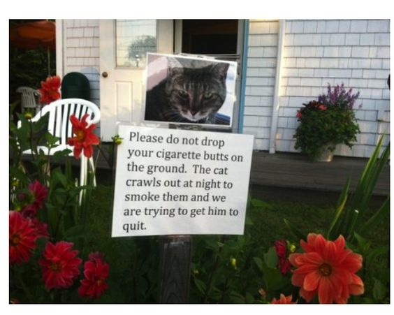 hahahah bad kitty