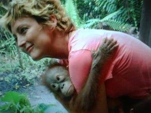FreeAnimalVideo.org Co-Founder Sandra Mohr Carrying Orangutan. We have lots of shots of Orangutans at the site for your free download and use.