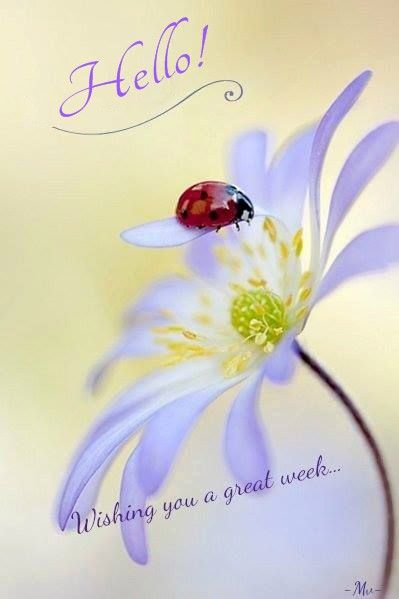 Wishing you a great week.