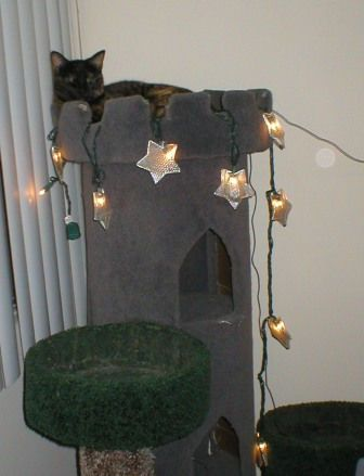 How to build your own cat furniture random pinterest for Castle cat tower