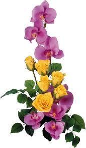 bouquet de roses: