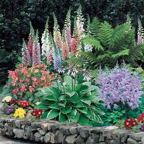 Shade Perennial Flowers Helleborus Ferns Garden Plants