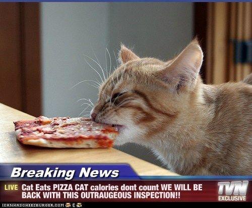 271d84085eba183fb4bb02e7e6245c98 pizza cat pizza pizza these breaking news cat memes are hilarious! 11 relationship,Pizza Cat Meme