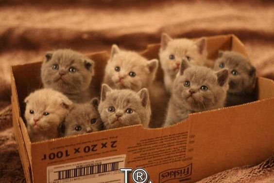 @sarahruss212 @Evepoisontinker @StarWaldron @VenusManTrap22 @MercemarsalM mew kittens adorable look at you pic.twitter.com/L2CnmKTGFD
