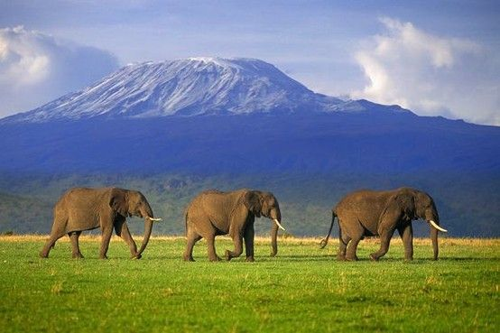 Mt Kilimanjaro, Tanzania, Africa: http://www.ytravelblog.com/7-travel-destinations-around-world-guided-tour/ #travel