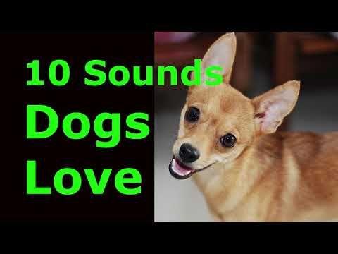 Sound That Makes Dog Tilt Head Left Right Prank Your Dog