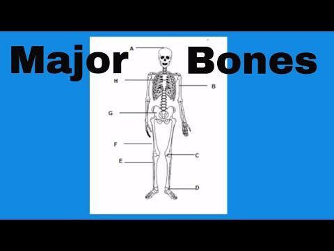 10 Learn The Bones Of The Human Body Youtube Anatomy Bones