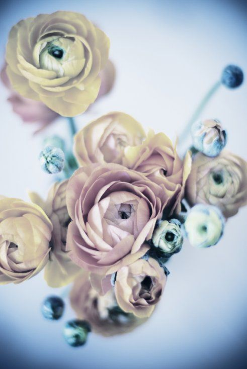 Anemones are a great way to add texture to a traditional bouquet.