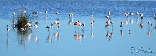 Aves de la Pampa, Carlos Casares, Argentina
