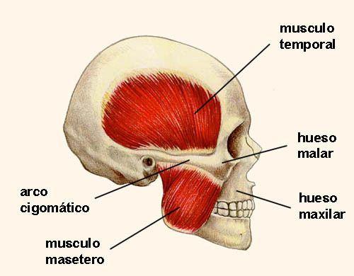 Músculos de la mejilla