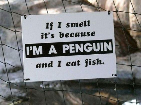 Funny-Animal-Signs-020.jpg (625×469)