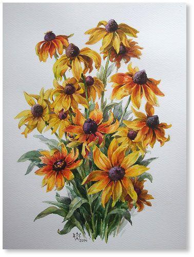 """Rudbeckia  watercolor 15.9""""x12.0"""", 2014; 200$"""