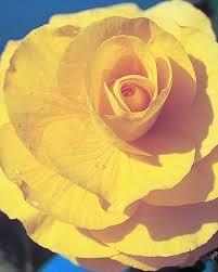 geel rood bloem - Google zoeken