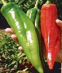 40+ Big Jim Pepper Seeds, $0.99