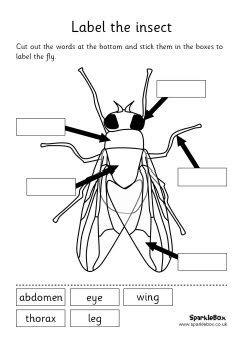 Insect labelling sheets and words