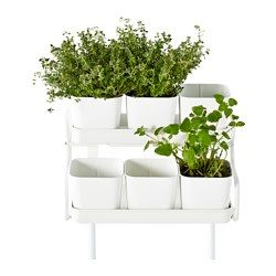Pinterest le catalogue d 39 id es - Ikea plante interieur ...