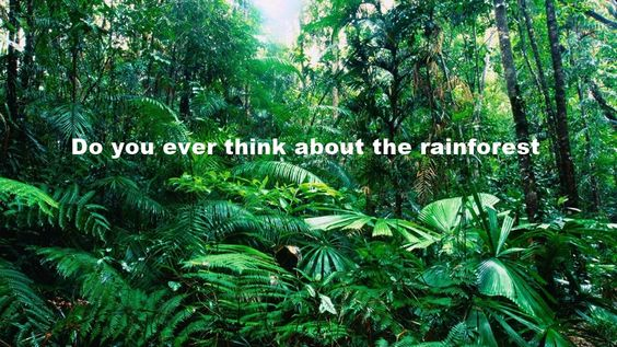 The #rainforests and upcoming #earthhour was the inspiration behind our latest post. #alternativefashion