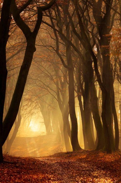 Sunrise Forest, The Netherlands photo via regi