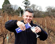 Milch macht Weinreben gegen Mehltau fit