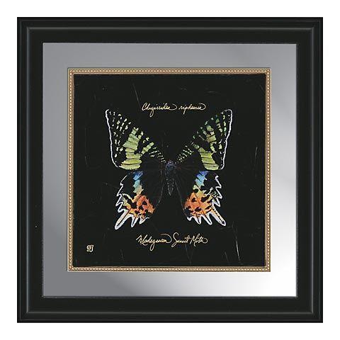 Butterflies-Mirror-B