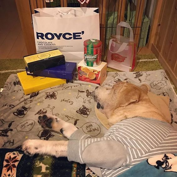 #labradorretriever #ラブラドール #kinta #愛犬 #lovedogs #老犬  #seniordog #goodmorning 😁 #お取り寄せ #roycé #チョコ 🍫 #自分へのご褒美 😛  キンタの睡眠導入剤は私が夕方から仕事行く時に飲ませるので夜にはお薬さめてその反動で夜活が活発に...😅 でも昨夜は少し控えめで私も数時間熟睡出来て頭スッキリしています☺️✨ いつもこの時期になると、クリスマス&お正月用に#ロイズ のスィーツをお取り寄せします❤️ #ギャレットポップコーン は名古屋に宝クジ買いに行った弟に買って来て貰いました😋 それが昨日揃いました😍  キンタはチョコ形は食べれないので、 またウマウマ買って来てあげるね〜🐶✨ これはぜ〜んぶママのです😁😁😁 疲れた身体には甘い物が一番ですよね😋  クリスマス🎄お正月🎍  楽しみですね✨✨✨