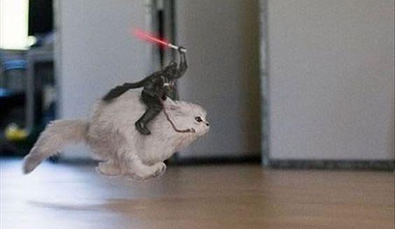Vader cabalgando un gatito