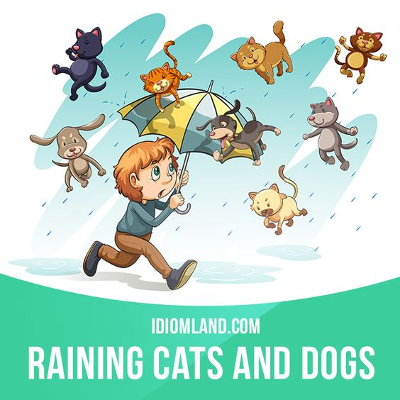 """It's raining cats and dogs"" means ""it's raining very heavily"".  Example: The weather was horrible on Saturday. It was raining cats and dogs all day.  #idiom #idioms #saying #sayings #phrase #phrases #expression #expressions #english #englishlanguage #learnenglish #studyenglish #language #vocabulary #dictionary #grammar #efl #esl #tesl #tefl #toefl #ielts #toeic #englishlearning:"