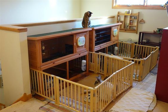 ♥ Pet Rabbit Ideas ♥  Our solution for the perfect indoor rabbit hutches!  I used sticky linoleum tiles on a cardboard base for under the hutches and faux wood 'rolling chair mats' for the runs.: