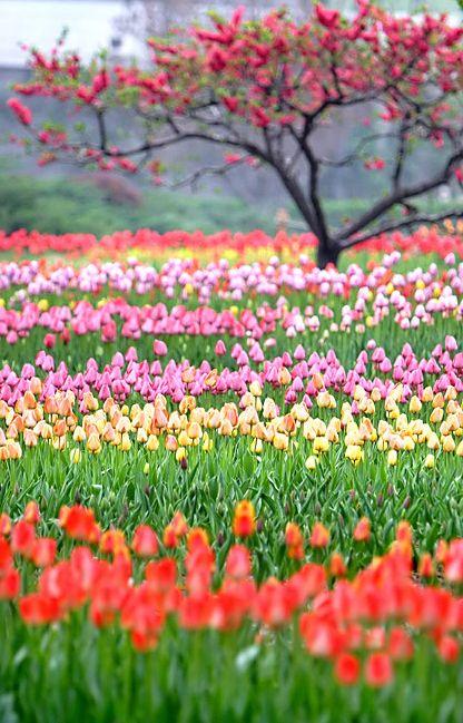 Campo de flores.