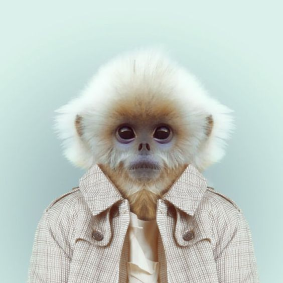 1 | See A Sloth In A V-Neck And Other Fashionable Animals In Zoo Portraits | Co.Create: Creativity \ Culture \ Commerce