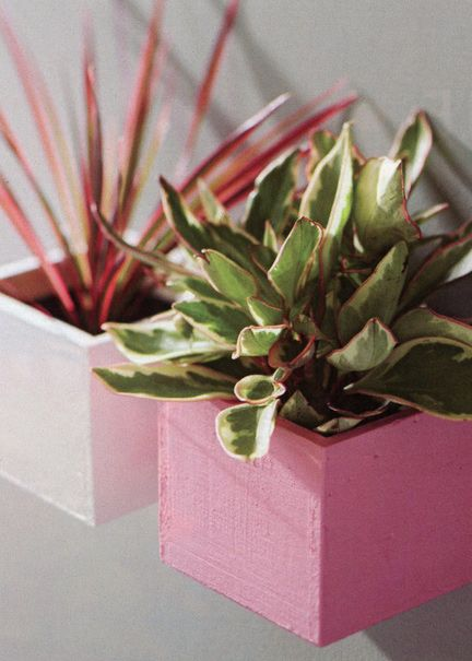 Mini Wall Gardens: A splash of paint and picture-frame hangers, and these indirect-light-loving houseplants become part of your decor.