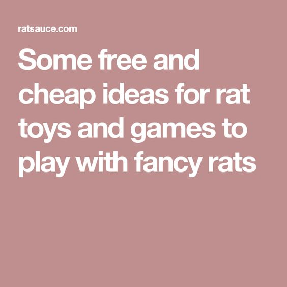 Some free and cheap ideas for rat toys and games to play with fancy rats